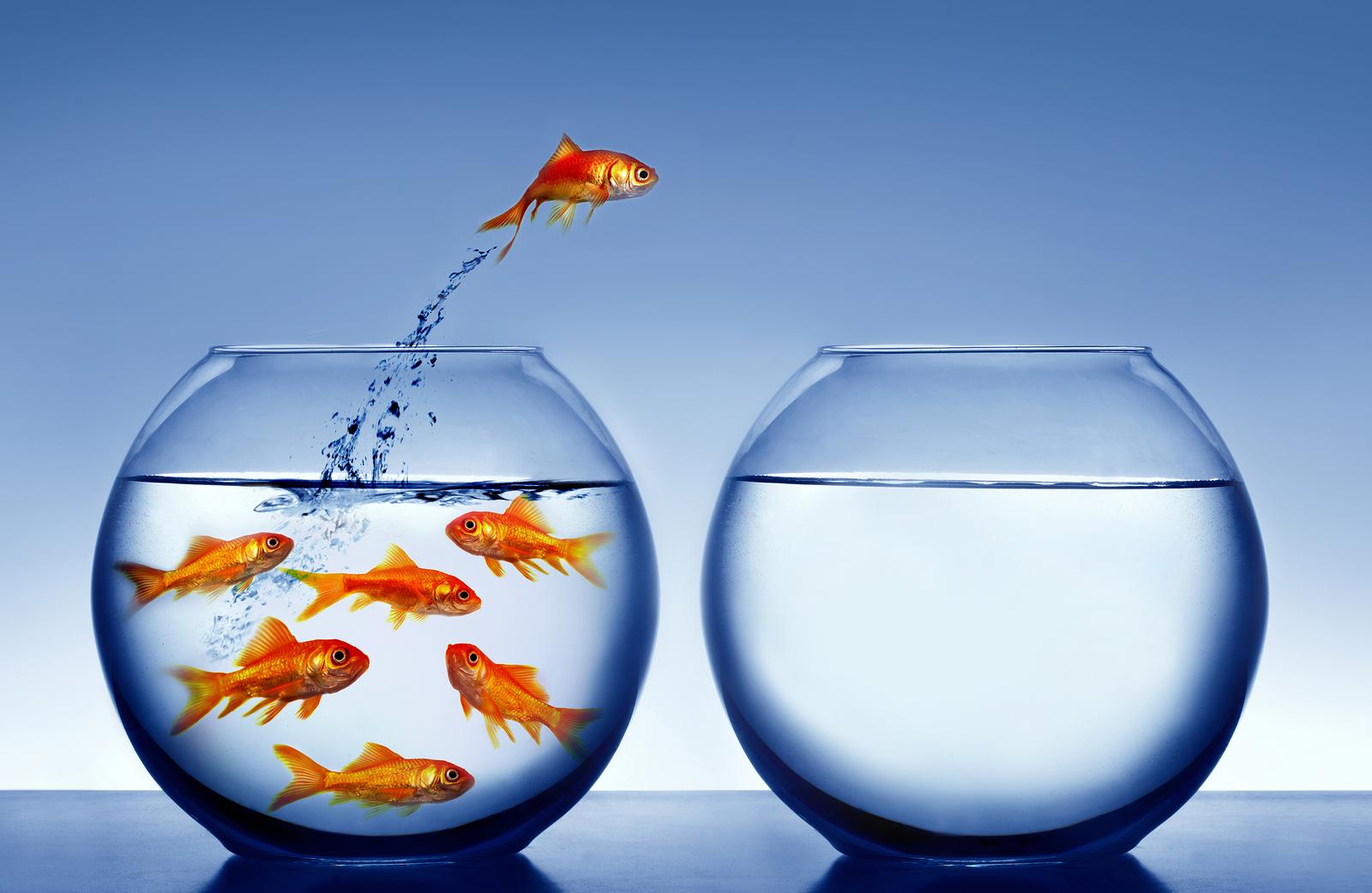 bigstock-goldfish-jumping-out-of-the-wa-52418623